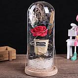 Троянда у склі. Квітка в колбі великий, фото 2