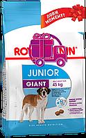Корм Royal Canin Giant Junior Роял Канін Джайнт Юніор для цуценят з 8до18 / 24месяцев 15кг
