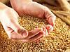 Обработка с\х складов и продукции от амбарных вредителей