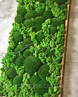 Озеленение стабилизированным мхом