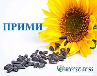 Семена подсолнечника ПРИМИ (стандарт), Нертус Агро
