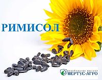 Семена подсолнечника РИМИСОЛ (стандарт), Нертус Агро