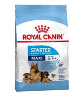 Royal Canin (Роял Канин) Maxi Starter для щенков круп. пород до 2-месяцев, беременных и кормящих сук