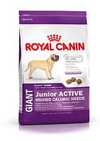 ROYAL CANIN (Роял Канин) GIANT JUNIOR ACTIVE для активных щенков гигантских пород с 8 месяцев
