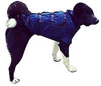 Бронежилеты для охотничьих собак