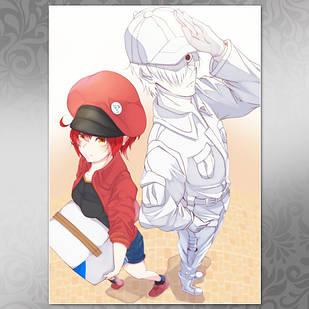 Плакат Аниме Hataraku Saibou 01