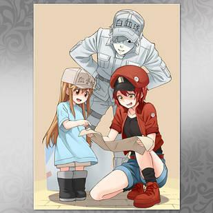 Плакат Аниме Hataraku Saibou 04