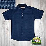 Нарядный костюм для мальчика: рубашка с коротким рукавом, брюки и бабочка, фото 3