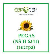 Семена подсолнечника Pegas (NS H 6341) (экстра), А-Е (5), 2018 г.у., ЕВРОСЕМ