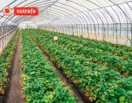 Тепличная пленка SOTRAFA 16м 150 мкм TRC с АК+IR+EVA Прозрачная 8-ми сезонка