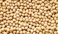 Семена сои АПОЛЛО под гербицид 1 репрод.