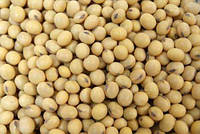 Семена сои УЛЬТРА под гербицид 1 репрод.