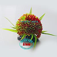 Растение Атман Q-109D1, 7.5см
