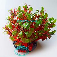 Растение Атман Q-131A, 7.5см