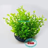 Растение Атман Q-060C, 7.5см