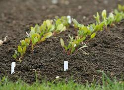 Готовим землю к посевам