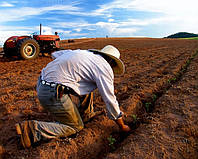 Общая обработка почвы осенью и весной.