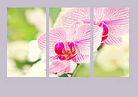 "Модульная картина - триптих ""Орхидея"""