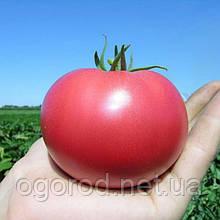 Розализа F1 10 шт насіння томату низькорослого рожевого Seminis Голландія