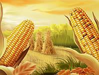 Кукуруза РЕФЛЛИ КС (РЕАЛЛІ КС)