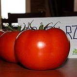 73-521 RZ F1(Дофу) 100 шт. семена томата высокорослого Rijk Zwaan Голландия, фото 4