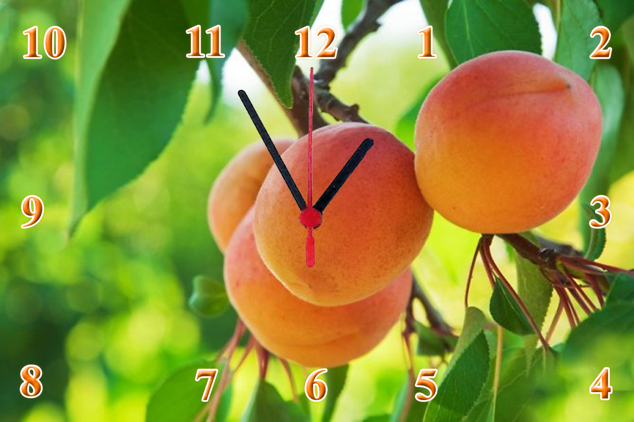 "Настенные часы МДФ кухонные ""Абрикос на ветке"" кварцевые"