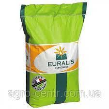 Семена подсолнечника ЕС Андромеда, Евралис