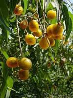 Мыльные орехи без косточек(100гр.Индия)-лучший натуральный шампунь, бальзам и кондиционером.