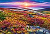 Пазл Castorland Northern Palette, 1000 эл., фото 2