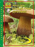 Мицелий Белый гриб дубовик, 10 г