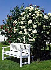 Роза Шнеевальцер (Schneewalzer) Плетистая , фото 2