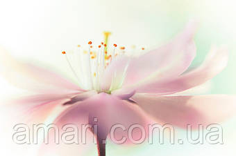 Цветочный воск