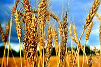Удобрение для озимых зерновых культур