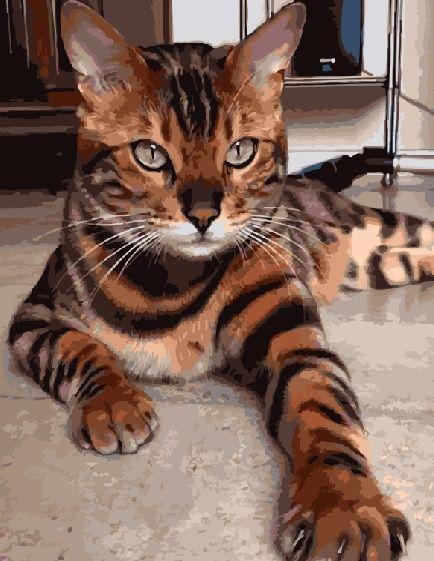 Картина по номерам Бенгальская кошка 40 х 50 см (BK-GX3801)