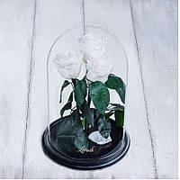Стабилизированные три розы в колбе Lerosh - Standart 33 см, Белая - 138956
