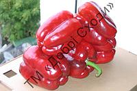 Клаудіо F1 (ранній, плоди кубоподібної форми чотирикамерні, червоні, товщина стінок 10-14 мм) Nunhems 1000 шт (ТМ Добрі Сходи)