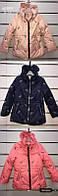 Куртка для девочек, Setty Koop, 4,8,10,12,14 лет,  № AP865