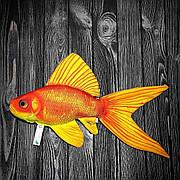 Золотая рыбка 60х30 см