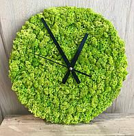 Часы из стабилизированного мха, живые часы, фото 1