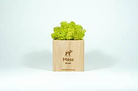Брендированный экосувенир Moss Cube (светлое дерево)