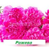 Гвоздика Кан Кан (на зріз) (колір на вибір) 50 шт., фото 2