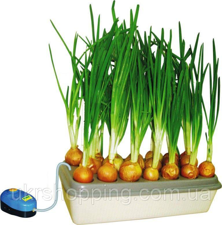 🔝 Установка для выращивания зеленого лука Луковое счастье, гидропоника для дома   🎁%🚚