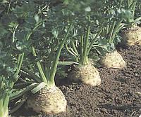 Семена сельдерея Илона, 10 000 сем., Bejo