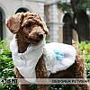 """Куртка """"Снежный цветок"""" для собак Is Pet. Одежда для собак, фото 6"""