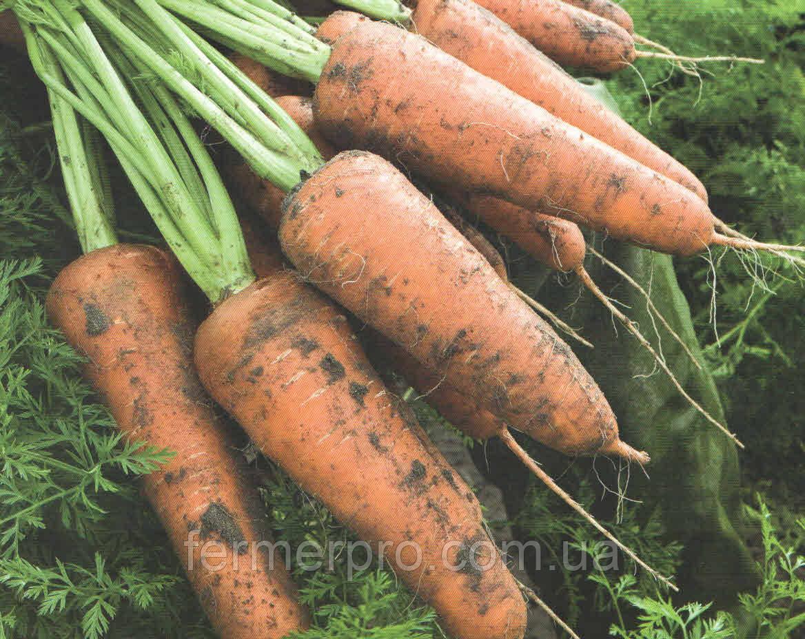 Семена моркови Кордоба F1 (1,6-1,8)  1 млн сем. Bejo