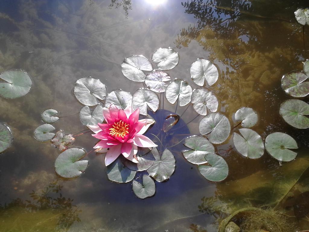 Фото водных и прибрежных растений