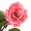 Долгосвежая роза Розовый Кварц в подарочной упаковке (не вянут от 6 месяцев до 5 лет), фото 4