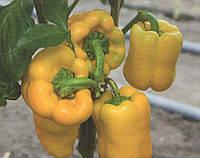 Семена перца Турбин F1 (Turbine F1) Bejo 500 семян