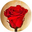 Долгосвежая роза Алый Рубин в подарочной упаковке (не вянут от 6 месяцев до 5 лет) на коротком стебле, фото 2