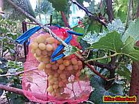 Защитная сетка от насекомых для кистей винограда (5 кг)